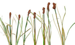 HO Scale Model Train Cattails How To