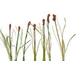 How to make cattails for your layout